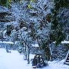 tls: snow