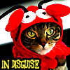lobster cat in disguise