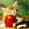 Stephanie: kittycuddle