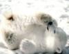 polar_bear_nn