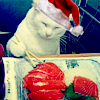 Christmas sushi kitty