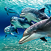 xfairy1013: Dolphins