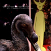 Purpleyin/Hans: dodo