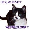 Cat-Lothy-wuzzat?