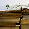 booksleaf