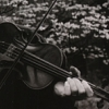 music fiddle