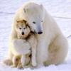 patron saint of neglected female characters: bear hug