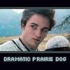 Twilight lulz--prairie dog!