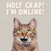 I'm online cat
