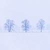 Season   Winter, Stock   Winter