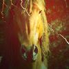shadowhorse13 userpic