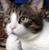 кот мыслящий