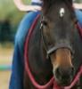 foalstory userpic