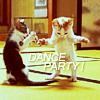 America's Next Top Hermit: stock: lulz kittens dance party