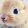 America's Next Top Hermit: stock: baby bunny so cute