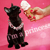 CAT // princess