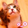 Larissa: kitty o_O