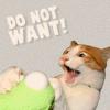 Larissa: kitty DO NOT WANT