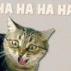 Larissa: kitty hahahahaha