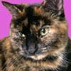ddreslough userpic