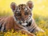 tigra_ok userpic