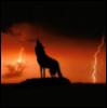 Dusk Wolf