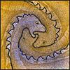Дракончиковая спиралька