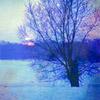 tinygreentrees userpic