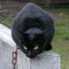 unrealcolonel: кот на цепи