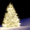 Dragonfly_lily: Christmas tree