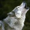 wolfie259 userpic