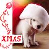 chic_c: Xmas-puppy