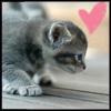peko2 userpic