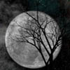 Full moon with tree