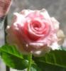 marsdreamer userpic