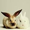 Lou: bunnies