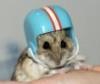 sk8in_hamster userpic