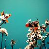 graphicesque flowers