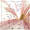 sarah_mo userpic