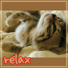 animals: cat relax