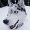 oglala_sioux userpic