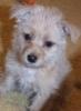 litle_dog userpic