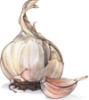 diary_of_garlic userpic