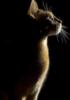 goddess cat