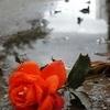 queen_lara userpic