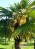 palmariy userpic