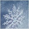 a rearranger of the proverbial bookshelf: Snowflake