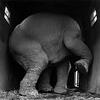 башня из слоновой кости
