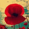 nowincolor userpic