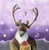 Calzephyr: Christmas